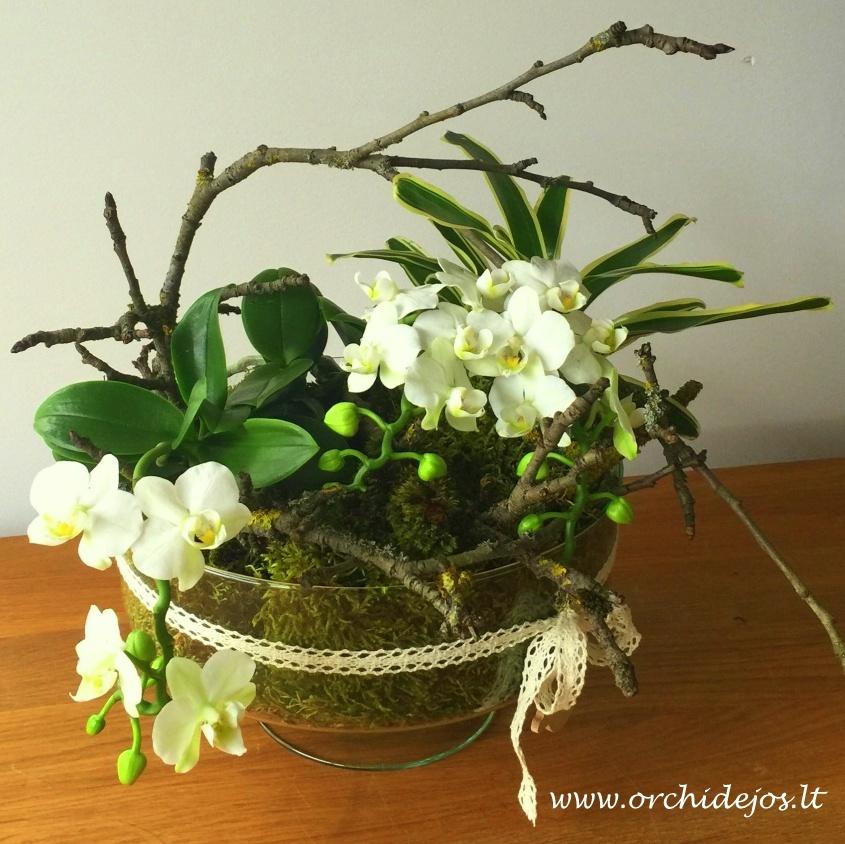 Arrangement With Mini Orchid Orchids Orchid Care