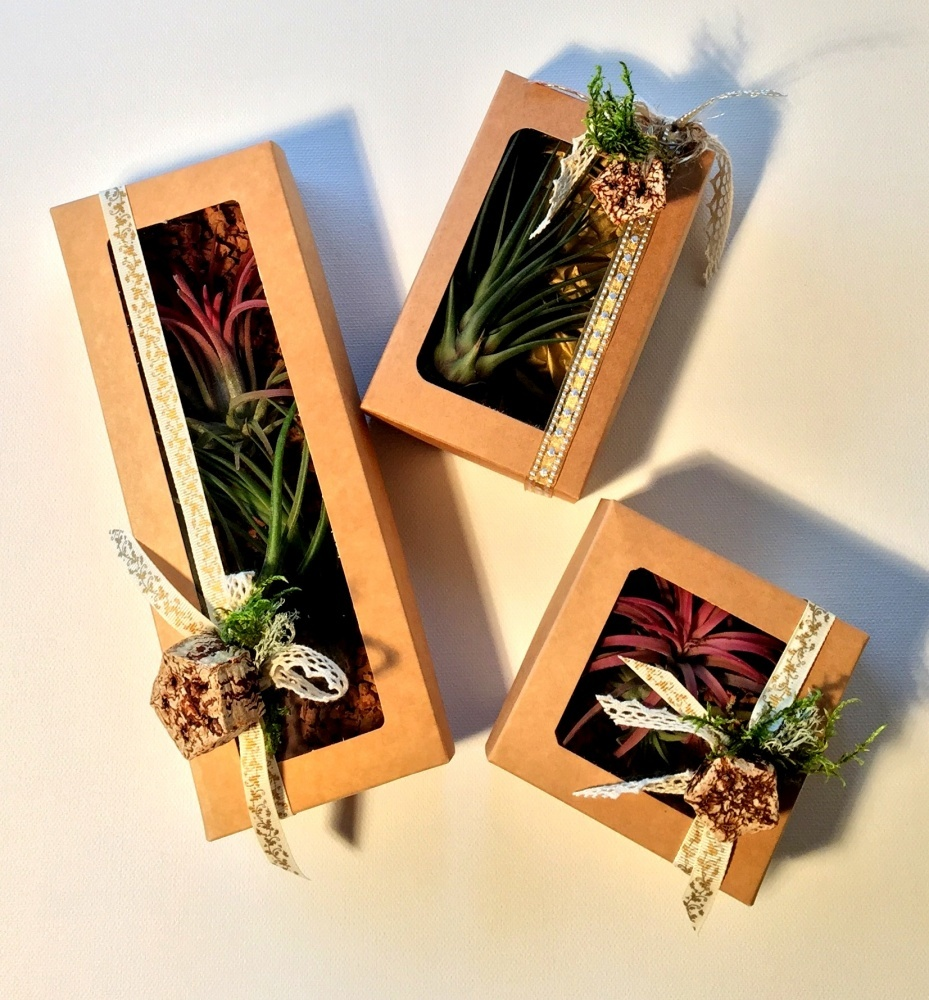 Tillandsia 3 Mix