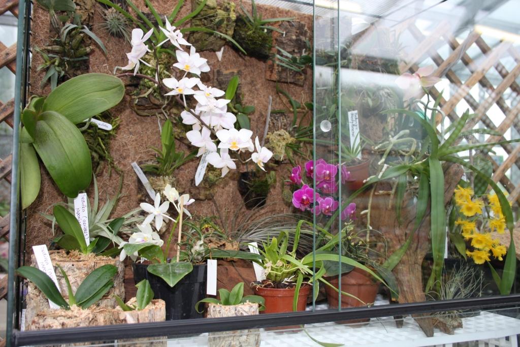 Выращивание орхидей на даче 930