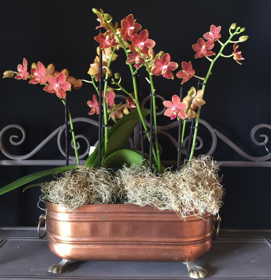 Doritaenopsis Little Peach Orchids Orchid Care